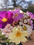 20.04.07-Blumengruss-von-der-Saturn
